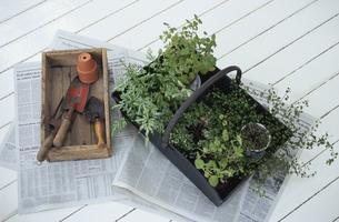 ガーデニング道具と鉢植えの写真素材 [FYI03367590]