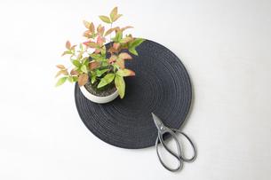盆栽と剪定バサミの写真素材 [FYI03367878]