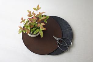 盆栽と剪定バサミの写真素材 [FYI03367879]