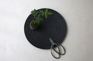 盆栽と剪定バサミの写真素材 [FYI03367882]