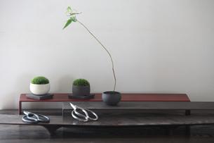 盆栽とコケと剪定バサミの写真素材 [FYI03367890]