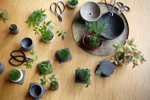 テーブルの上の盆栽と剪定バサミの写真素材 [FYI03367901]
