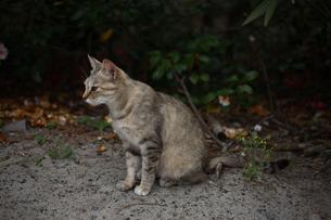 ネコの写真素材 [FYI03367912]