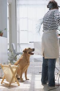 アイロンをかける女性と犬の写真素材 [FYI03367999]