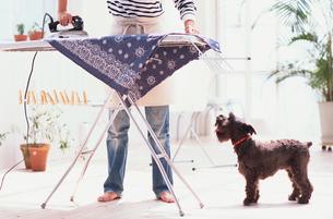アイロンをかける女性と黒い犬の写真素材 [FYI03368003]