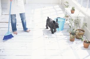 掃除をする女性と犬の写真素材 [FYI03368005]
