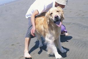 砂浜で犬(ゴールデンレトリバー)と戯れる男性の写真素材 [FYI03368014]