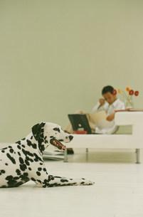 白いソファに座った男性と犬(ダルメシアン)の写真素材 [FYI03368209]