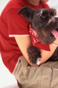 女性に抱きかかえられた犬の写真素材 [FYI03368225]