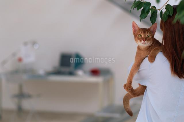 女性に抱かれたアビシニアンの写真素材 [FYI03368230]