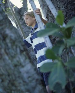 木と男の子の写真素材 [FYI03368512]