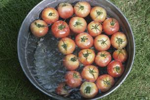 トマトの写真素材 [FYI03368705]