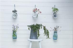 壁を飾る花とイスに置かれた植物の写真素材 [FYI03368822]