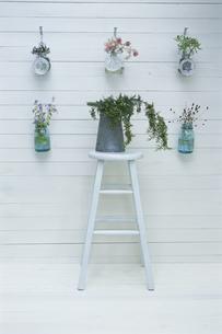 壁を飾る花とイスに置かれた植物の写真素材 [FYI03368823]