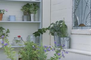 窓辺を飾る植物の写真素材 [FYI03368824]
