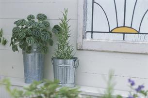 窓辺を飾る植物の写真素材 [FYI03368825]