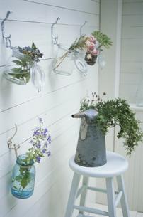 壁を飾る花とイスに置かれた植物の写真素材 [FYI03368826]
