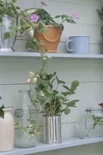 棚に飾られた花や植物の写真素材 [FYI03368830]