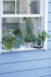 窓辺を飾るハーブの鉢植えの写真素材 [FYI03368852]