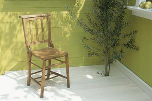 オリーブの木とイスの写真素材 [FYI03368879]