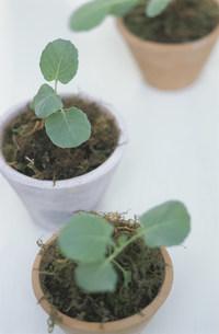 植物の苗の写真素材 [FYI03368889]