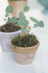 植物の苗の写真素材 [FYI03368890]