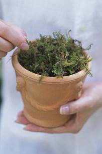 植物を持っている女性の写真素材 [FYI03368891]