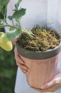 植物を持っている女性の写真素材 [FYI03368892]
