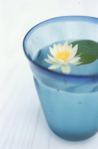 コップの中に蓮の花の写真素材 [FYI03368893]
