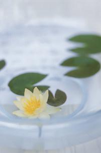 蓮の花の写真素材 [FYI03368894]