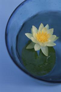 コップの中に蓮の花の写真素材 [FYI03368896]