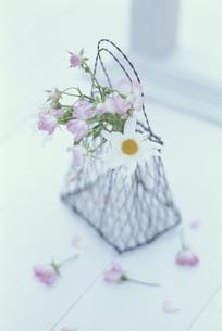 窓辺のワイヤーボックスに花の写真素材 [FYI03368901]