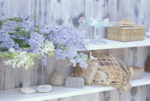 棚の上の花と貝殻入りメッシュ袋等の写真素材 [FYI03368905]