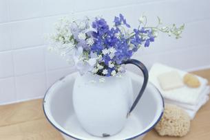 洗面器に花を生けた水差しの写真素材 [FYI03368919]