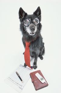 眼鏡とネクタイをした黒い犬の写真素材 [FYI03369040]
