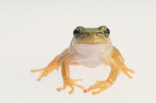 カエルの写真素材 [FYI03369146]