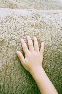 羊を触る子供の手の写真素材 [FYI03369213]