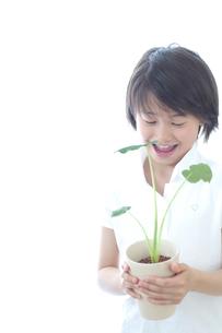 さといもの植木を持つ女の子の写真素材 [FYI03369302]