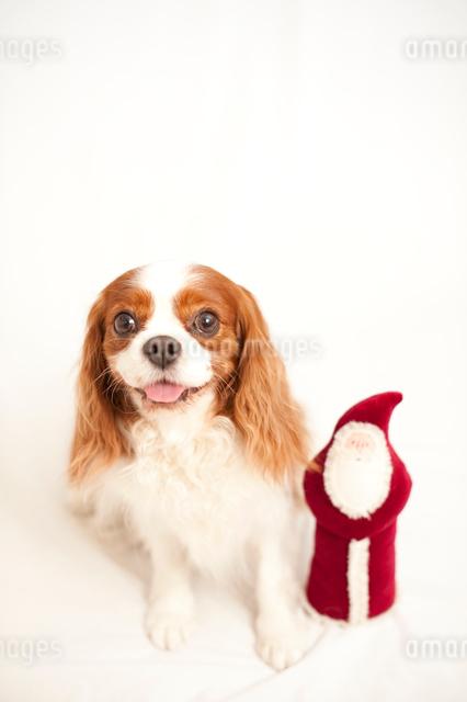 犬とサンタクロースの人形の写真素材 [FYI03369319]