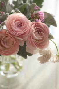 ラナンキュラスとスカビオサと白妙菊のフラワーアレンジの写真素材 [FYI03369466]