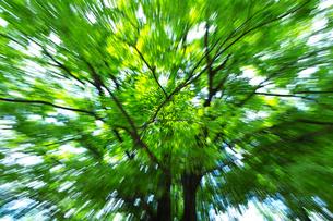 風の中の新緑の写真素材 [FYI03369838]