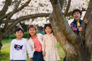 サクラの樹の下で遊ぶ子供達の写真素材 [FYI03369864]