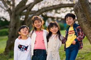 サクラの樹の下で遊ぶ子供達の写真素材 [FYI03369865]