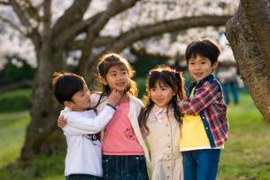 サクラの樹の下で遊ぶ子供達の写真素材 [FYI03369868]
