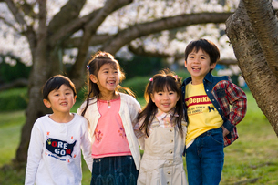 サクラの樹の下で遊ぶ子供達の写真素材 [FYI03369870]