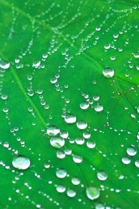 水滴のついたくもの糸の写真素材 [FYI03369880]