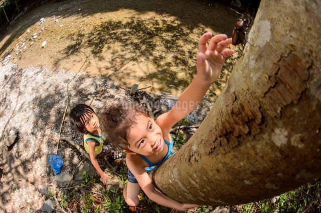 カブトムシを捕まえようとする子どもの写真素材 [FYI03369967]