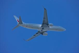 B737-800飛行機の写真素材 [FYI03370011]