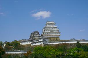 新緑の姫路城の写真素材 [FYI03370038]