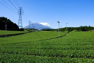 富士市より見た茶畑と富士山の写真素材 [FYI03370222]